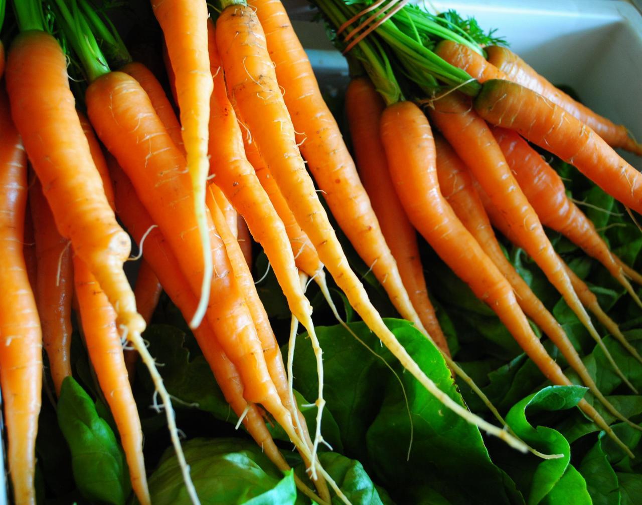 1 Botte de carottes