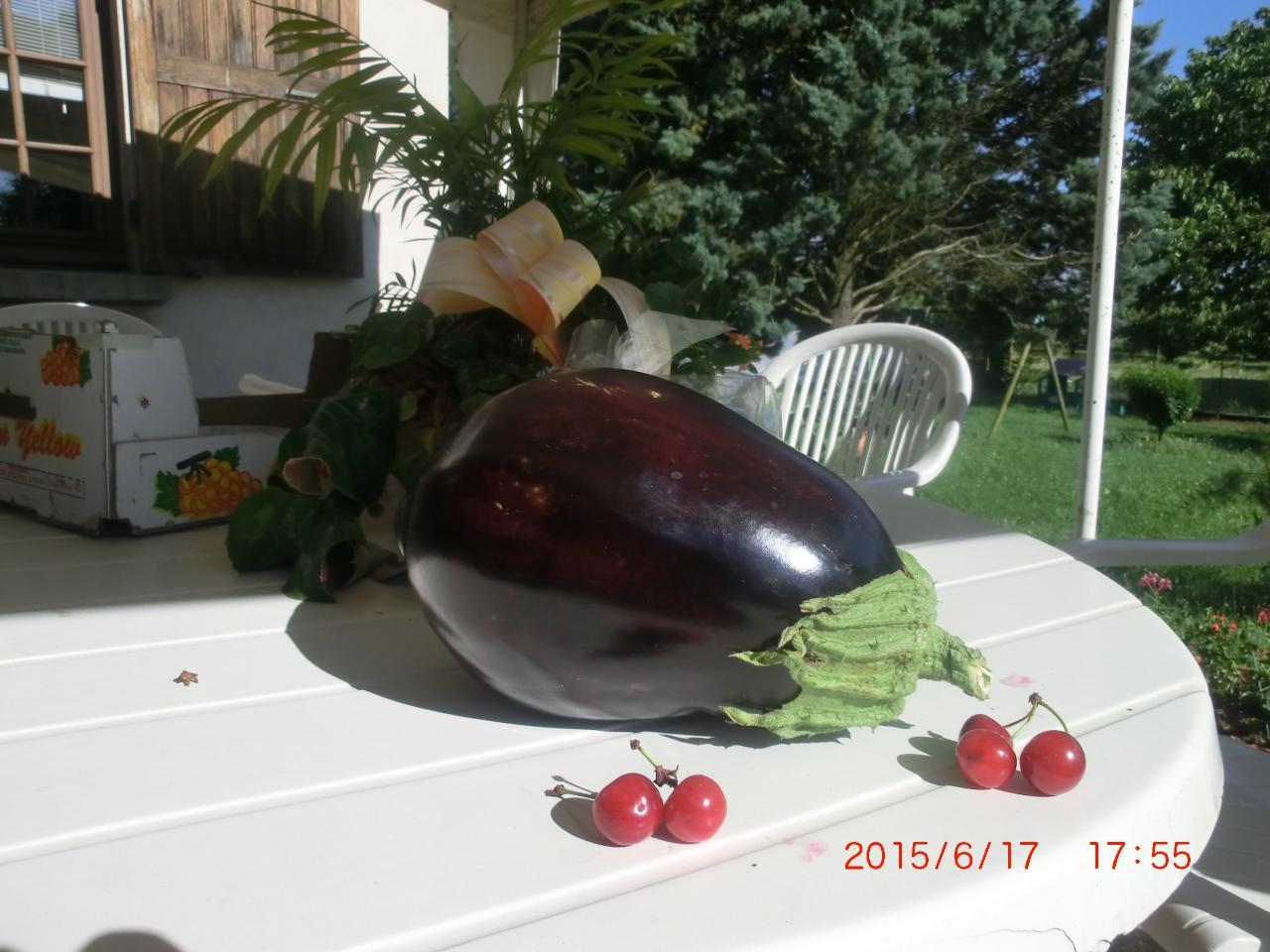 11 Aubergine du jardin