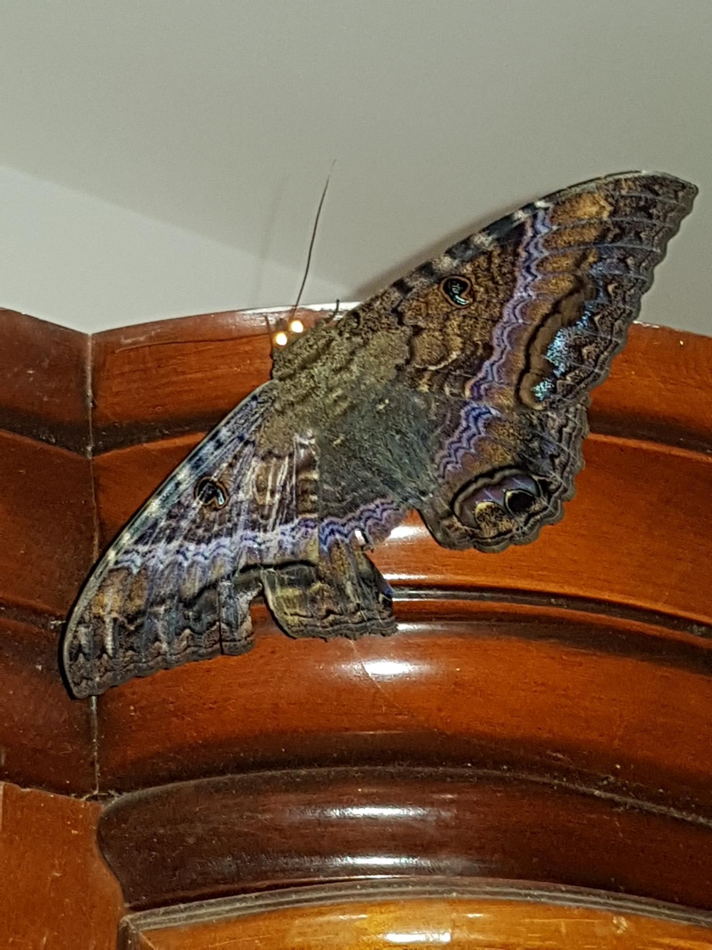 19 Papillon de nuit