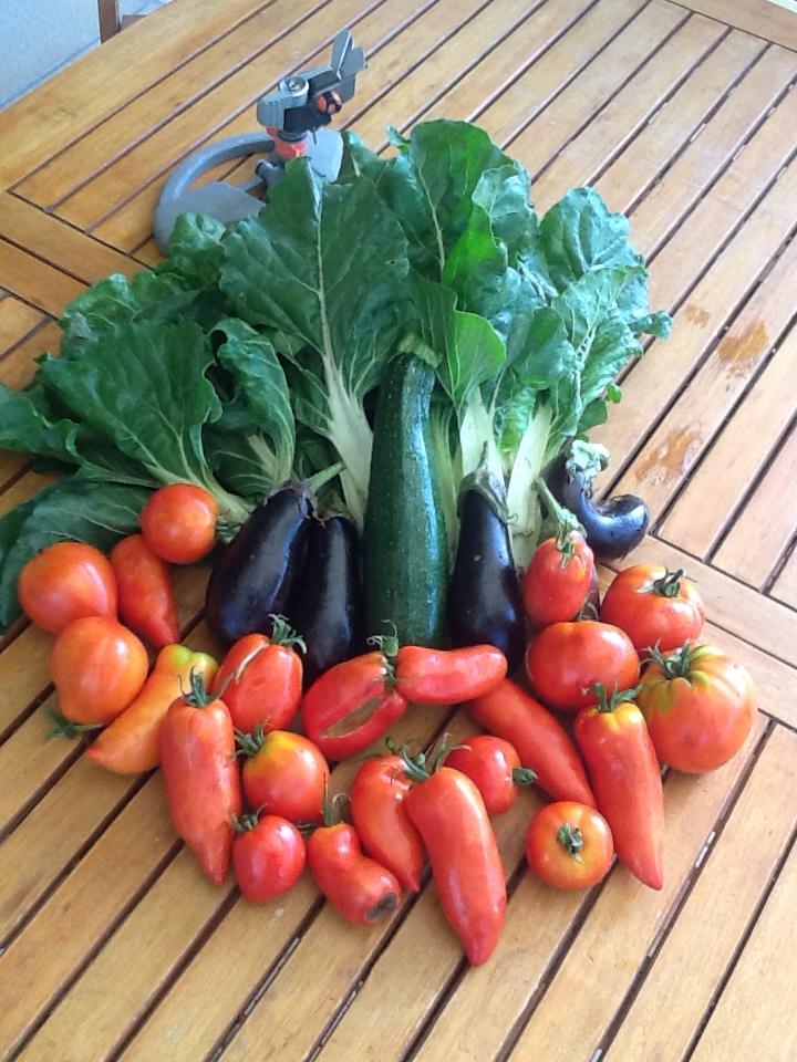 36 Legumes d'été